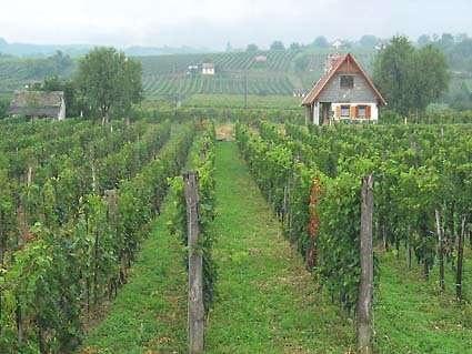 Pince - egy környezettudatos francia falu