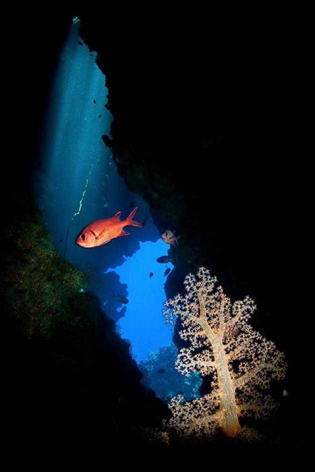 X. Élet a vízfelszín alatt - Tökölyi Csaba: Kompozíció