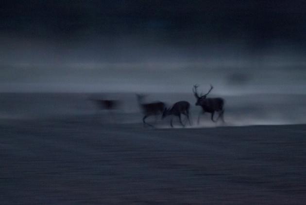 XI. Napnyugtától napkeltéig - Fekete Orsolya: Kezdődik…
