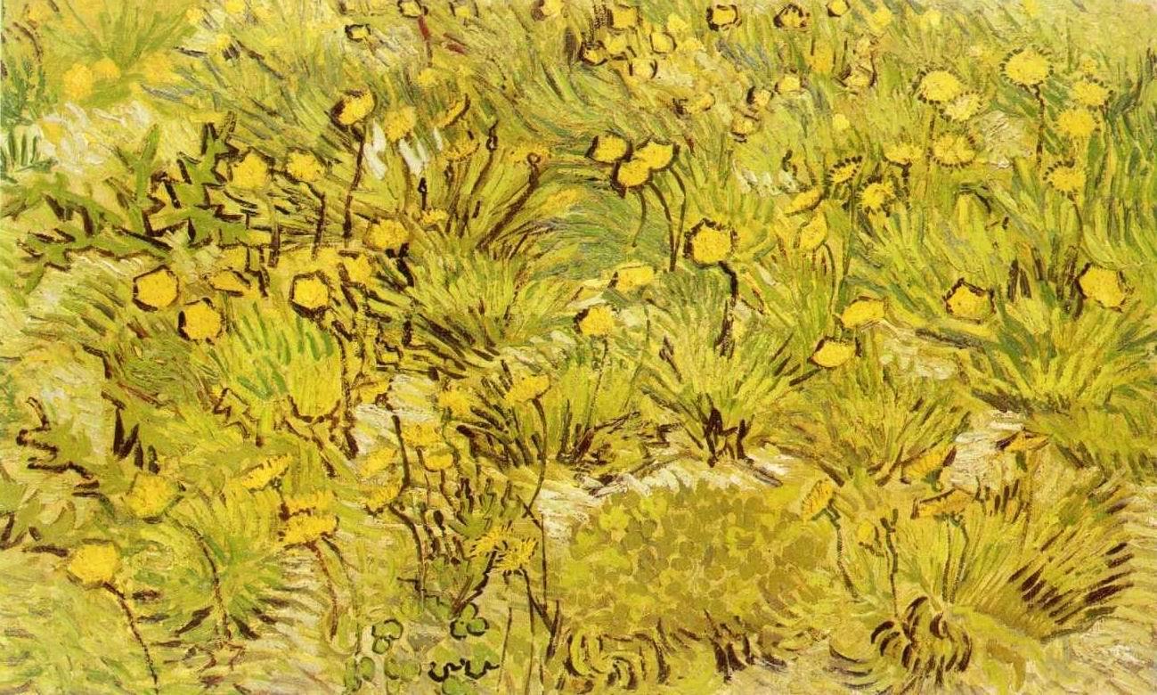 Sárga búzamezők