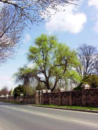 Az alsóvárosi temető Szekszárdon