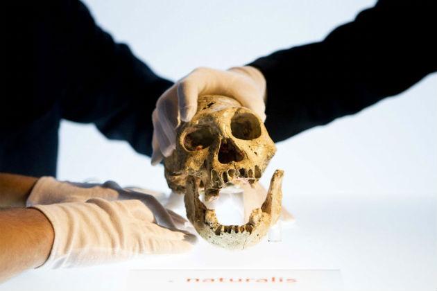 Az 1,8 millió éves dmaniszi koponya (Fotó: hirado.hu/AFP)