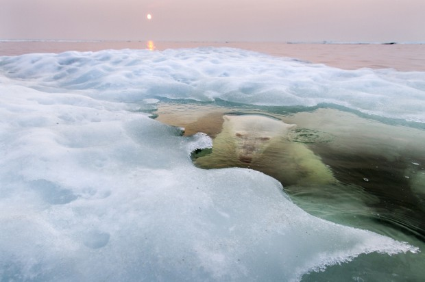 Paul Souders: Ice Bear