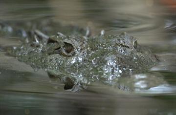 fotó: thespec.com