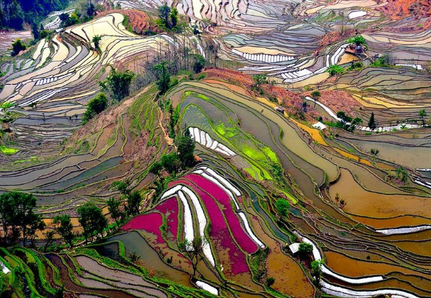 Kínai rizsföld (Fotó: Thierry Bornier)