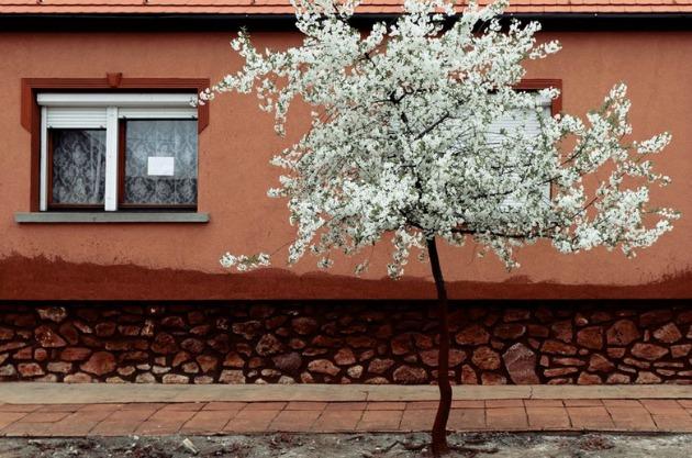 Fotó: Palindromo Mészáros
