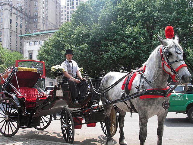 Fotó: horsebackmagazine.com