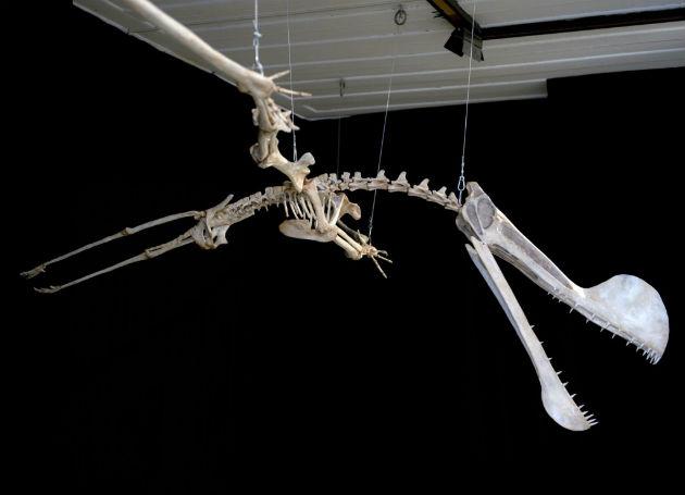 Illusztráció - Tropeognathus Mesembrinus pterosaurus (Fotó: AFP)