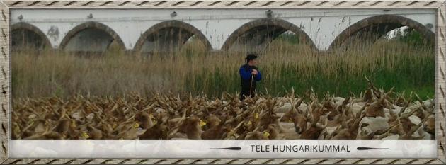 Jövő héten a Hortobágyi puszta kulturális és természeti oldalát ismerhetjük meg a Magyar Vitrin adásában
