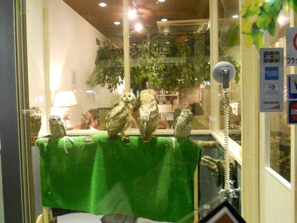 Fotó: wandertokyo.com
