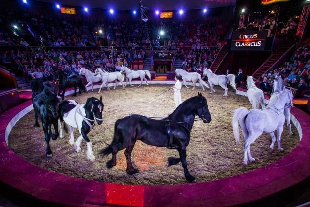 Circus Classicus (Fotó: sztarklikk.hu)