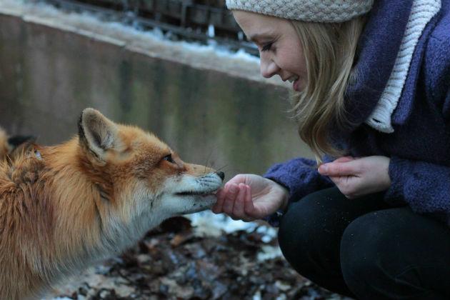 A rókatündér és a róka találkozása (Fotó: Filmteam/Rokonál Benedek)