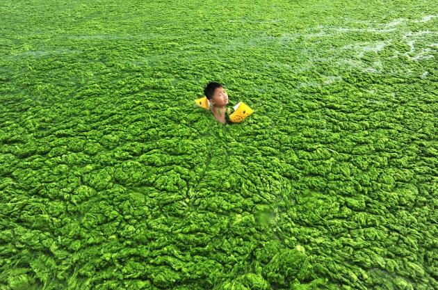 Kisfiú úszik egy algával borított víztározóban
