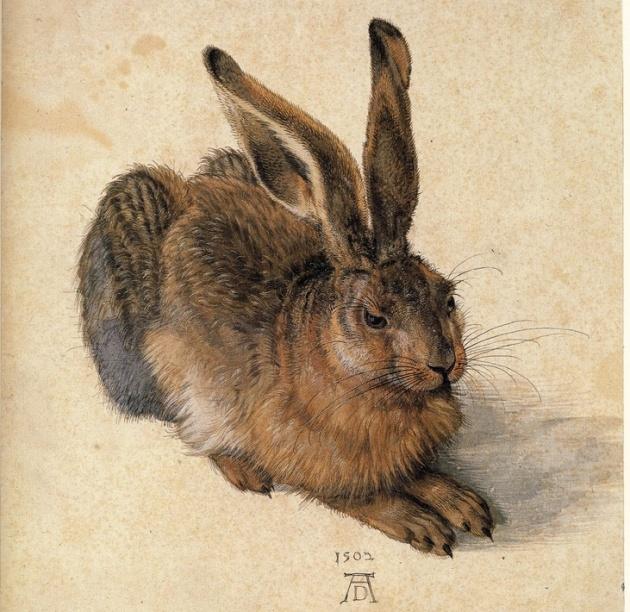 Dürer: Fiatal mezei nyúl, 1502 (Forrás: pinterest.com)