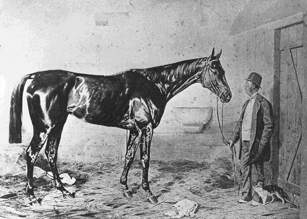 fotó: lovasok.hu