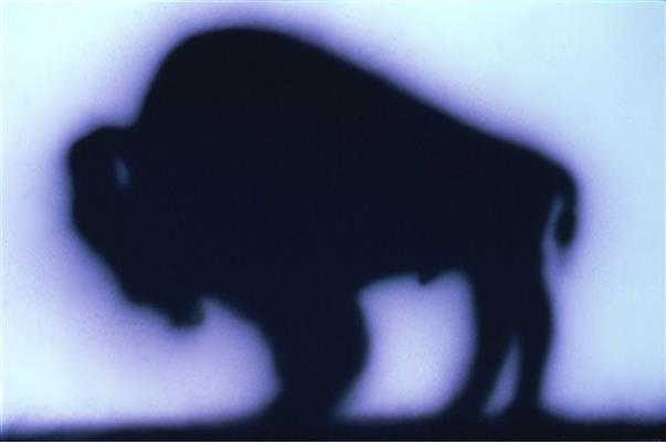 Edward Ruscha: Bölény-tanulmány #3, 1989, Akrill, papír, a művész és a Gagosian Gallery, Beverly Hills, California tulajdona.