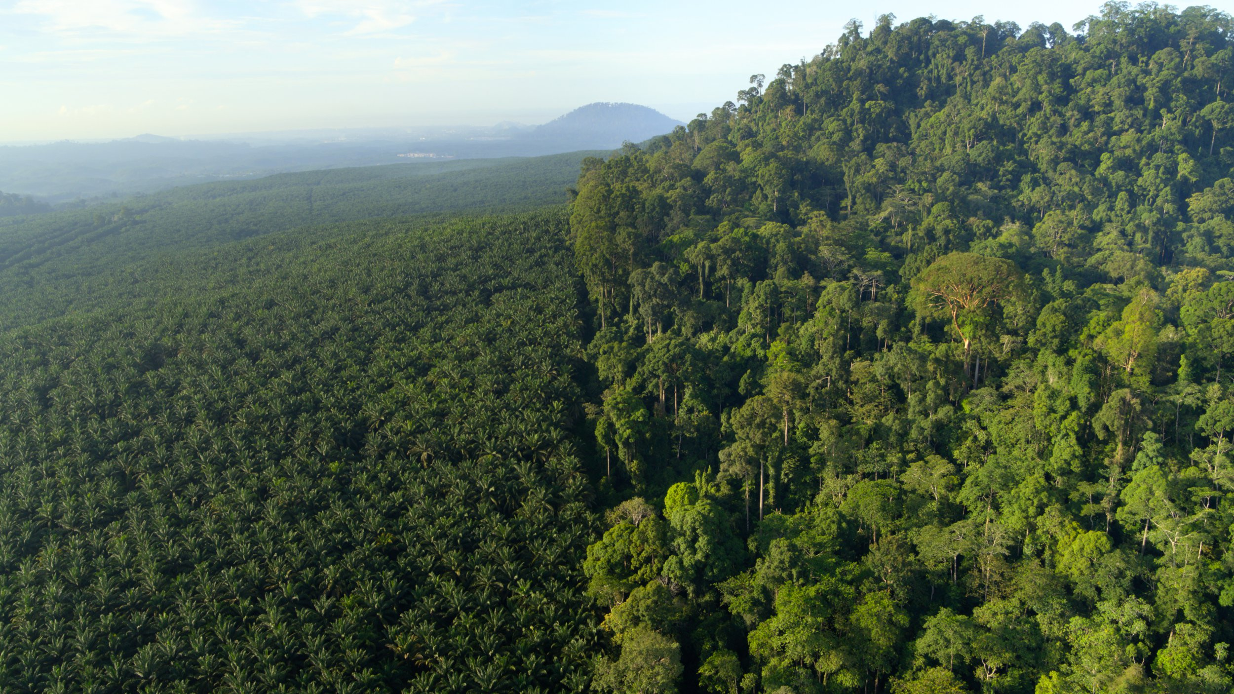 Jelenet David Attenborough A Life on Our Planet c. filmjéből