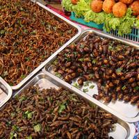 Ideje rovarokat enni?