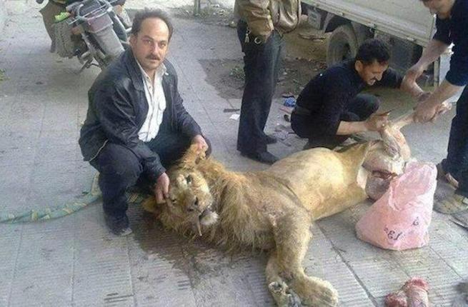 syria_lion.jpg