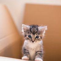Cicamesék: A kincset érő drága cicák