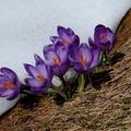 Tavaszvágy fotókban elmesélve