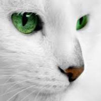 Cicamesék: Szutyejev * A szeszélyes cica