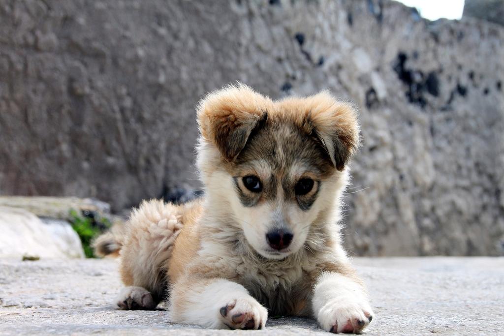 The_Puppy.jpg
