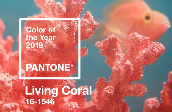 coral1.jpeg