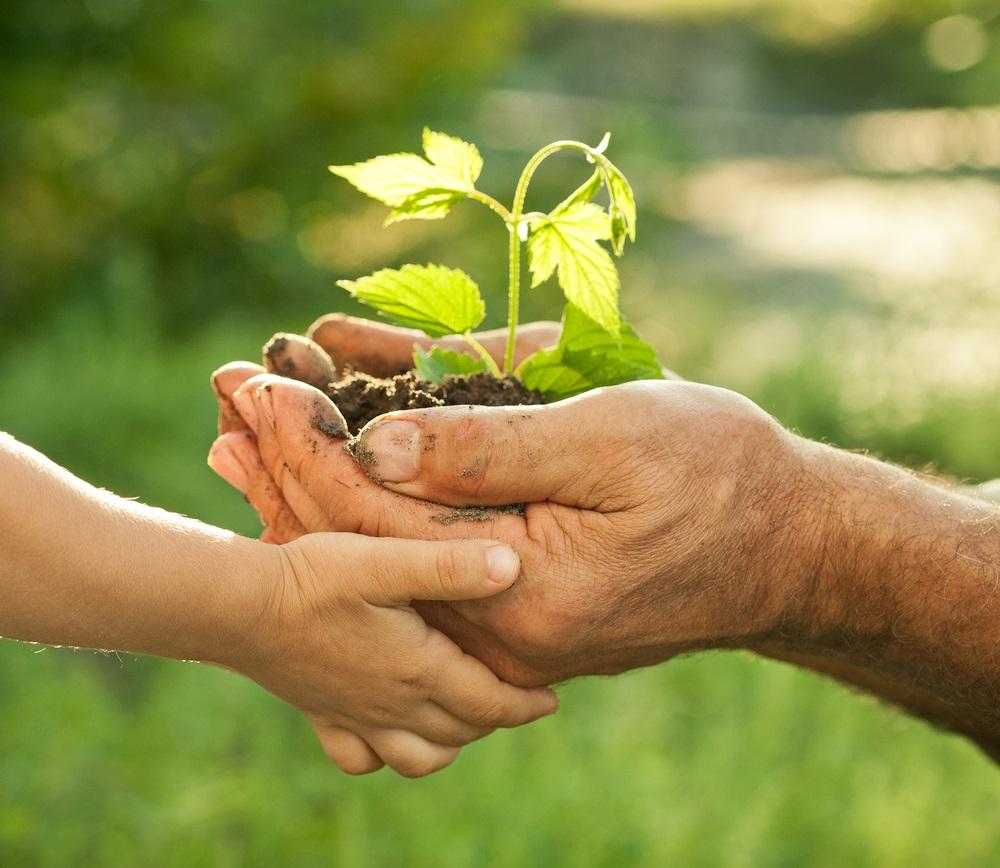 nurturing-hands.jpg