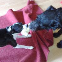 Frenki kutya gazdát keres 15. - Változások