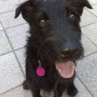Frenki kutya gazdát keres 16. - Sürgős a gazdikeresés... Segíts! :-(