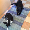 Frenki kutya gazdát keres 11. - Kutya örökbefogadás?