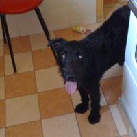 Frenki kutya gazdát keres 3. - egy nyugis nap meg egy hajcihős