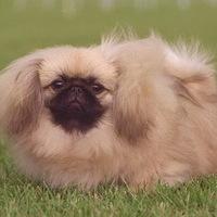 Bobi kutya lehetetlen küldetése