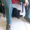 Frenki kutya gazdát keres 9. - Brrrr, kóválygós egy nap
