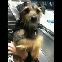 Az egyszeri kutya és a mozgólépcső esete