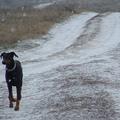 Karácsony négy lábon...gondolatok egy kutya naplójából