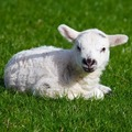 Állatok a húsvéti szokásokban