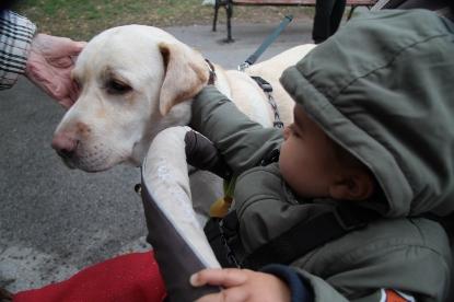 11 hónapos kisfiam a babakocsiból kinyújtózva markolássza Szása selymes bundáját - ő meg zokszó nélkül tűri