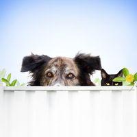 Lejtmenet az állatvédelemben?