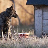 In Memoriam állatvédelmi törvénymódosítás