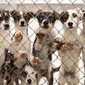 Állatvédők kiégése
