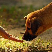 Állatvédő vagy?