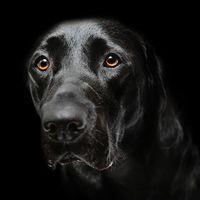 Áldozattá válás: Az állatbántalmazások anatómiája