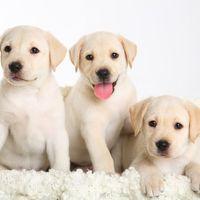 Magyar kutya, lengyel kutya, nem egykutya