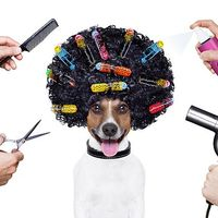 Állatvédelem és kutyakozmetika - Mennyire függ össze a kettő?
