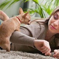 Kilencedik fejezet: Elmélkedés a kutyabuzikról