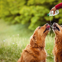 7+1 tipp a hőség túlélésére kutyáknak (is)