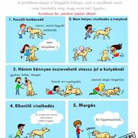 Kutya a gyerek mellett? Igen lehetséges!!!
