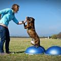 Az instabil közeg és a kutyák, avagy szuper tréning BOSU-val
